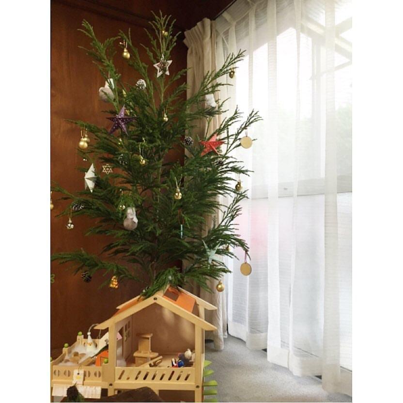 北山杉 クリスマスツリー